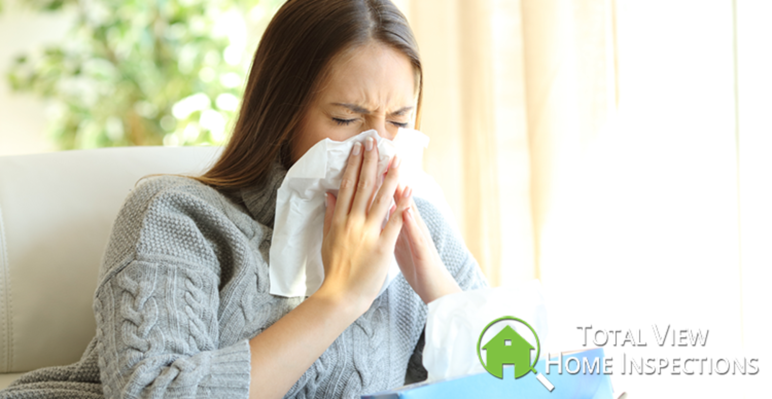 Importance of Mold Testing for Your Home
